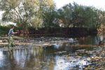 Donau-Fliegenfischer_5792